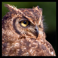 Eagle Owl Profile by KeldBach