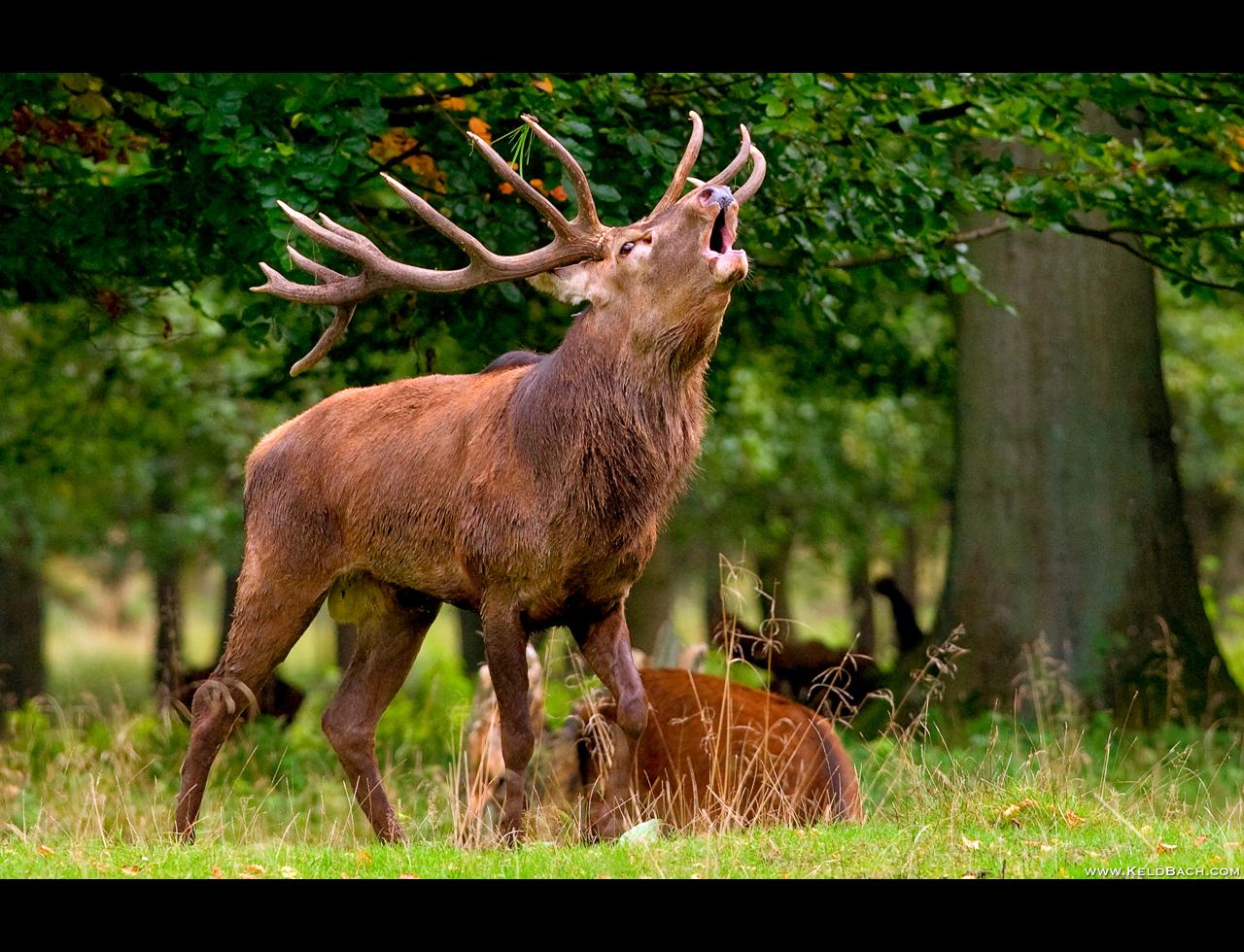 Hear Me Roar! by KeldBach