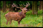 Rutting Season by KeldBach