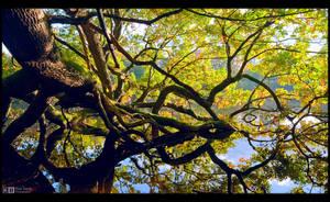 Fallen Giant in Fall by KeldBach