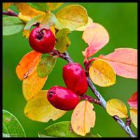 Fall Colours by KeldBach