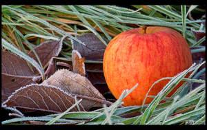 Last Apple by KeldBach
