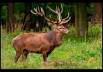 Red Deer Stag Posing by KeldBach