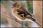 Lil' Birdie