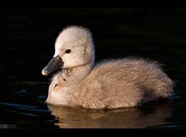 The Ugly Duckling by KeldBach