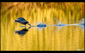 Running on Water by KeldBach