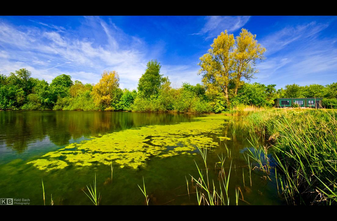 Duckweed by KeldBach