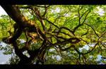 Tired Old Oak by KeldBach