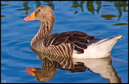 Goose in Blue