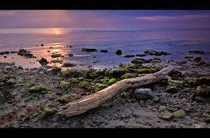 Driftwood by KeldBach