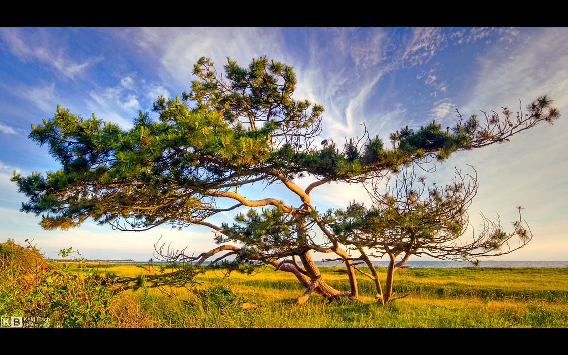 A Tree with Character by KeldBach
