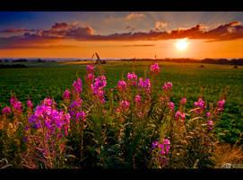 Rosebay in the Evening Light by KeldBach
