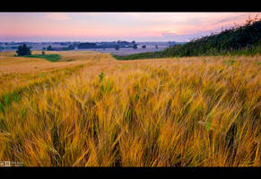 Golden Corn Field by KeldBach