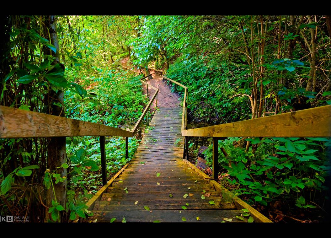 Into the Wilderness by KeldBach