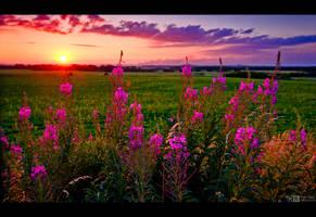Rosebay Sunset by KeldBach