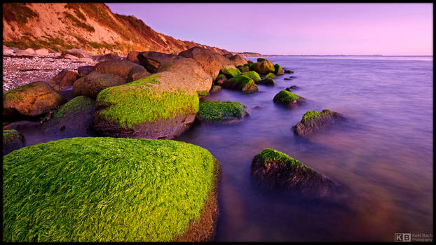 Mossy Rocks at the Beach