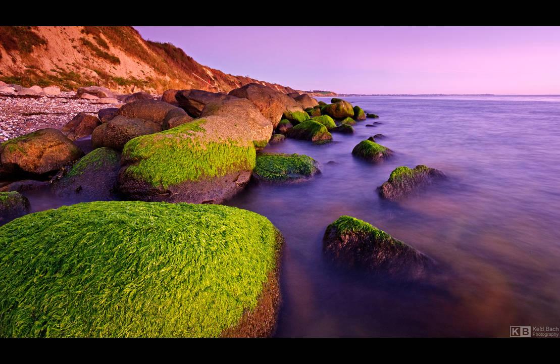 Mossy Rocks at the Beach by KeldBach