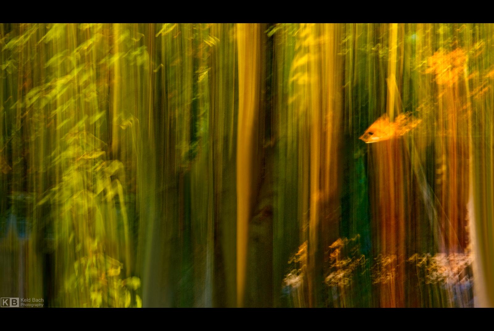 Underwater Forest by KeldBach