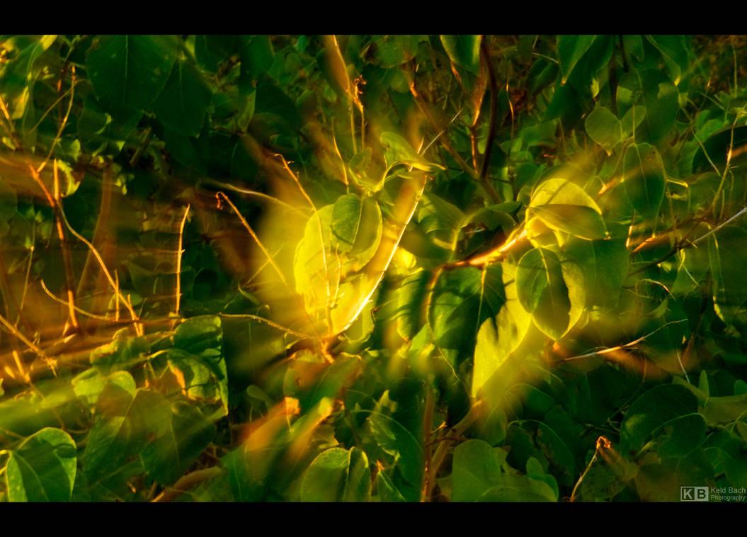 Glowing Leaves by KeldBach