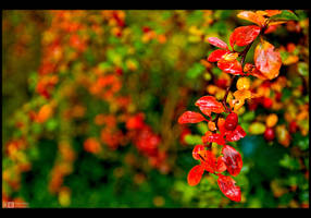 Touch of Fall by KeldBach