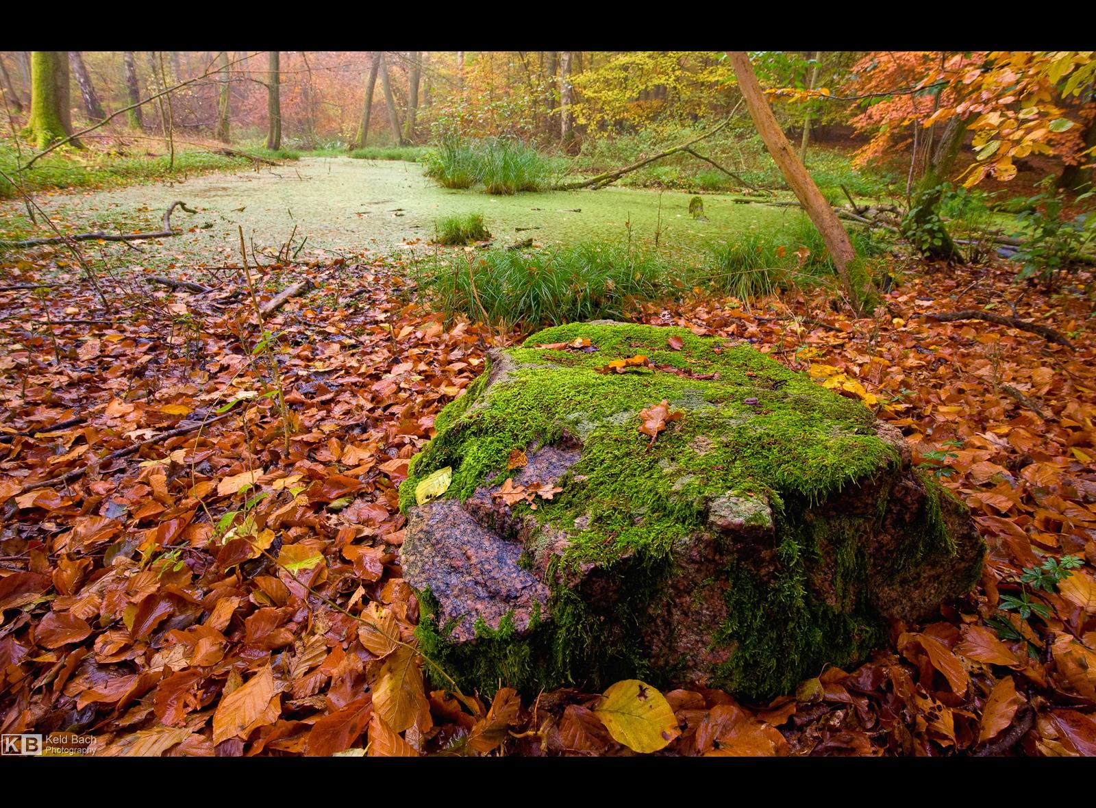 Mossy Rock by KeldBach