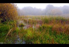 Misty Wetlands by KeldBach