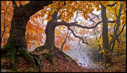 Gnarly Roots by KeldBach