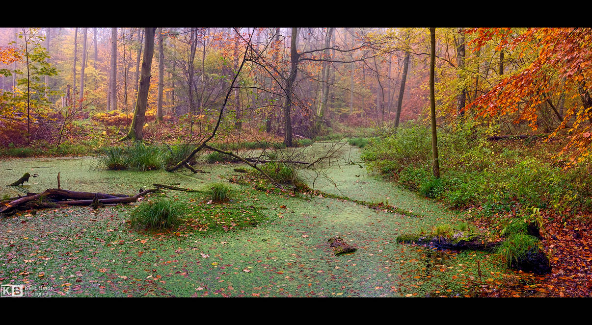 Autumn in the Swamp by KeldBach