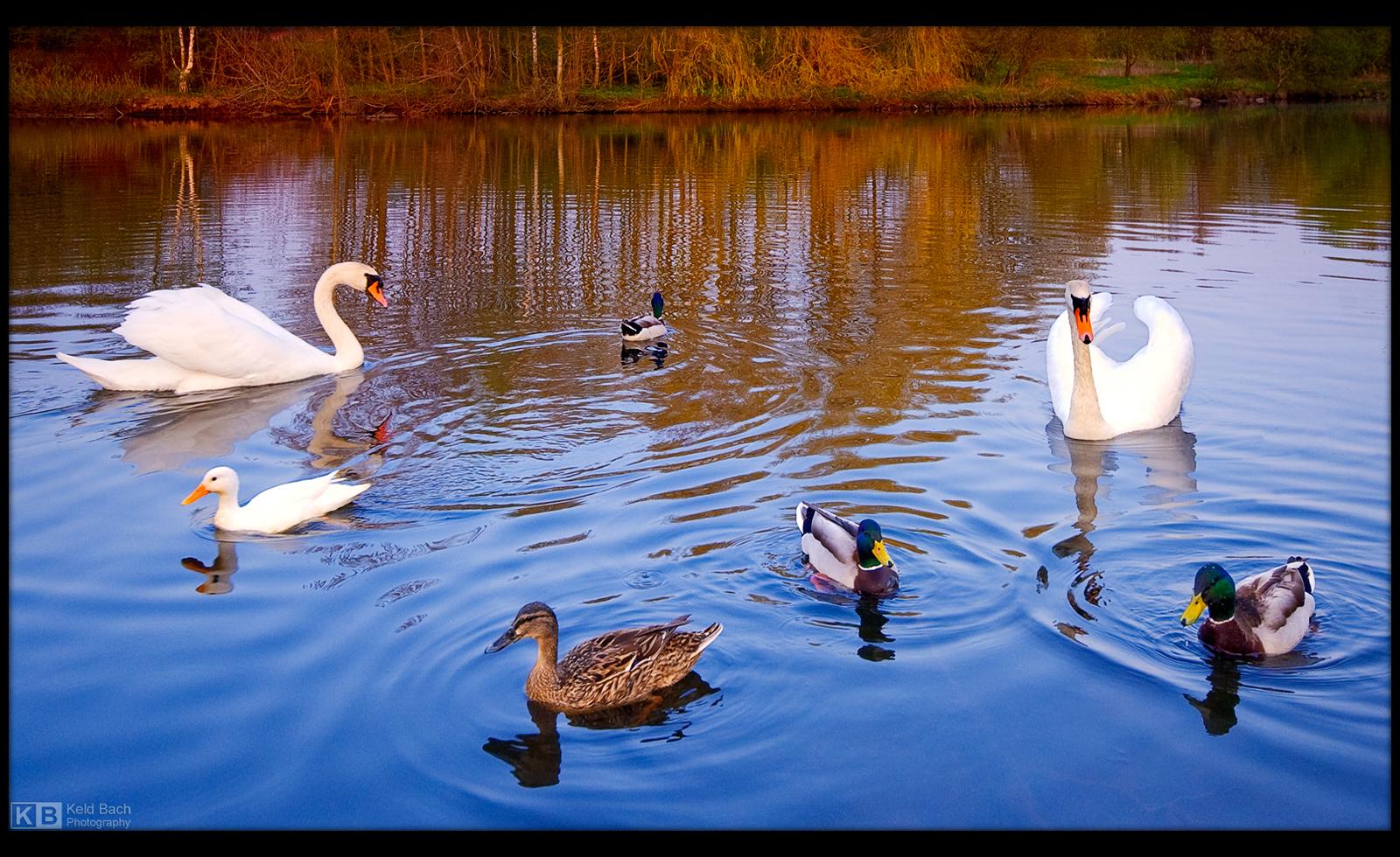 Chasing the Ducks by KeldBach