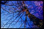 Winter Blues by KeldBach