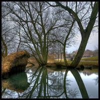 Bare Willows by KeldBach
