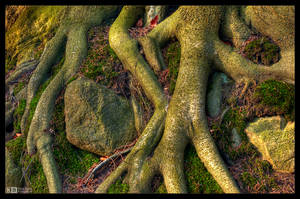 Roots of Life by KeldBach