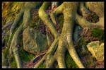 Roots of Life by KeldBach