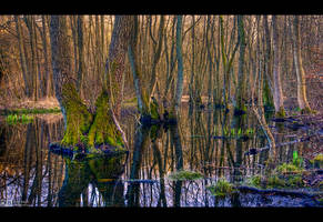 Chaos in the Swamp by KeldBach