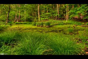 Springtime in the Swamp by KeldBach