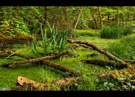 Back into the Wilderness by KeldBach