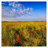 Poppy Field 2 by KeldBach