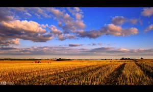 Golden Stubble Field by KeldBach