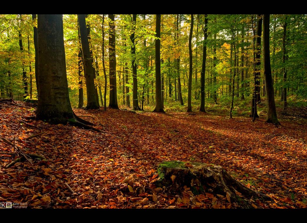 October Mood by KeldBach