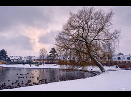 Winter Birds by KeldBach
