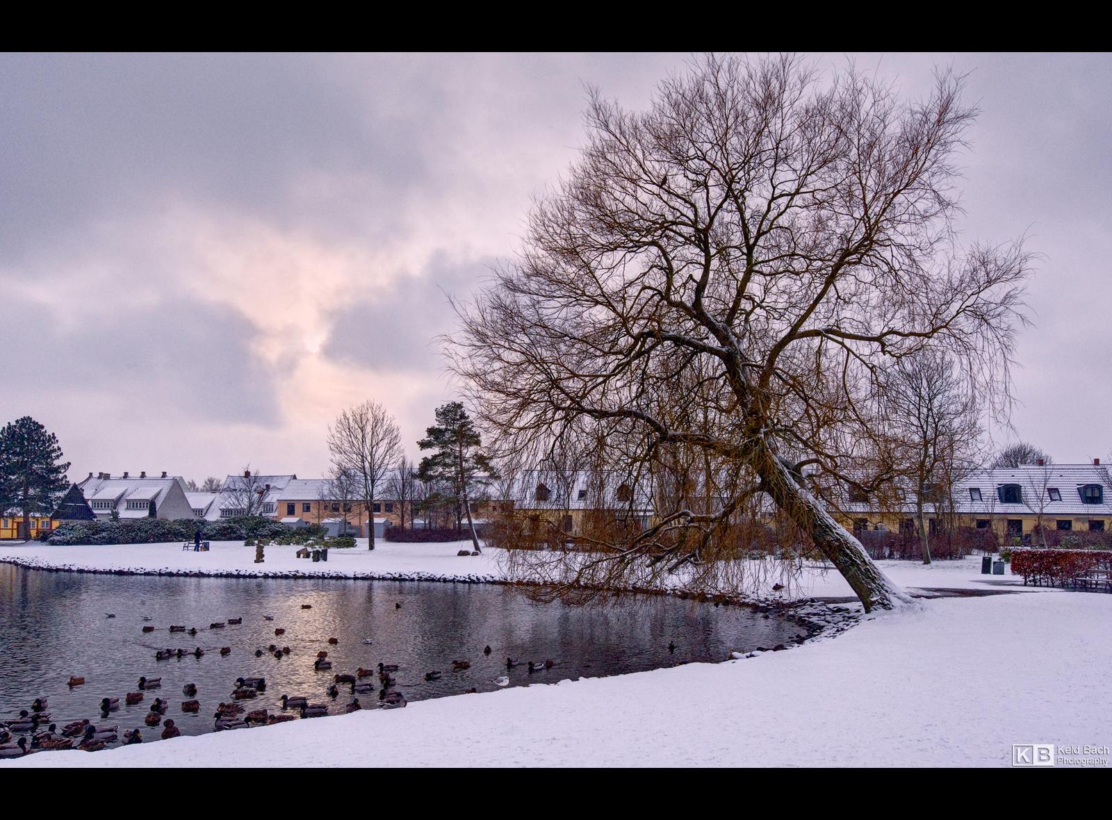 Winter Birds by KeldBach
