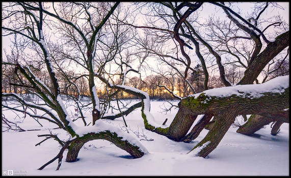 Fallen Giant, Winter