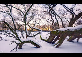 Fallen Giant, Winter by KeldBach