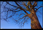 Against a Clear Blue Sky by KeldBach