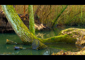 Old Willow Revisited by KeldBach