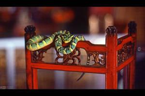 Sacred Pit Viper by KeldBach