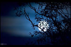 Spooky Moon Rising