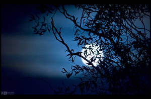 Spooky Moon Rising by KeldBach