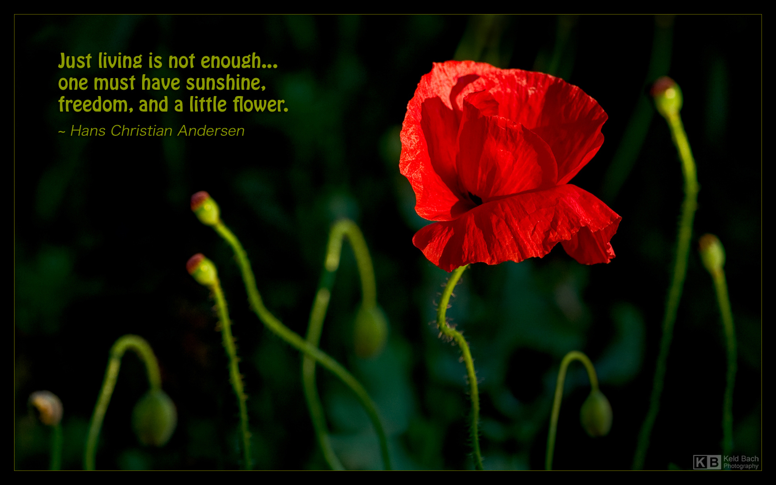 Just Living is Not Enough... by KeldBach