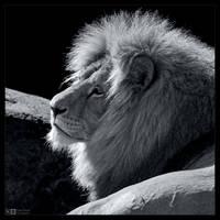 His Majesty in B/W by KeldBach